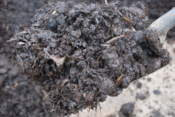 Matured Horse Manure