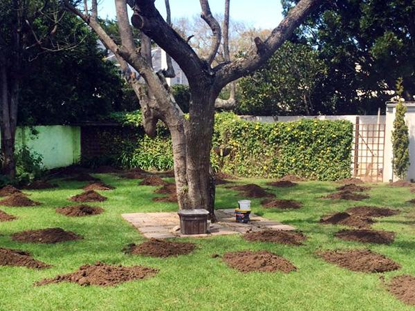 GSS-Bush-Soil